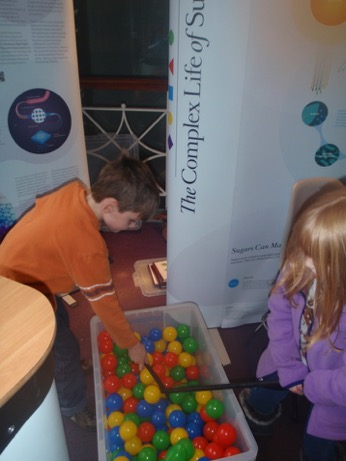 Race for fertilisation game at The Science Spectacular